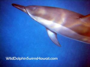 Dolphin Facts 14