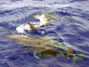 Dolphin Facts 19