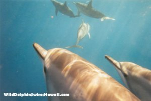 Dolphin Facts 9