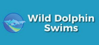 Wild Dolphin Swims Hawaii