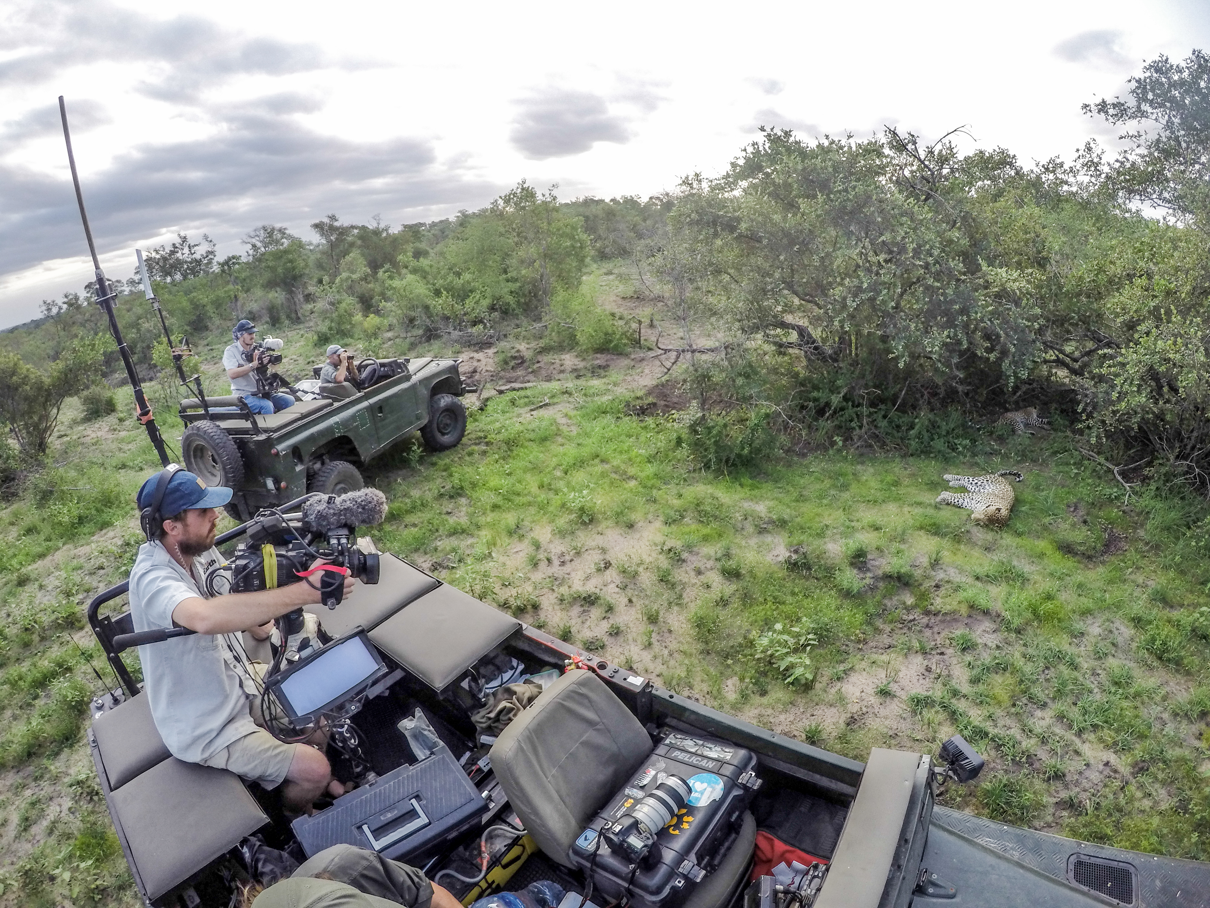 The Wildebeest migrates away from safariLIVE – WildEarth