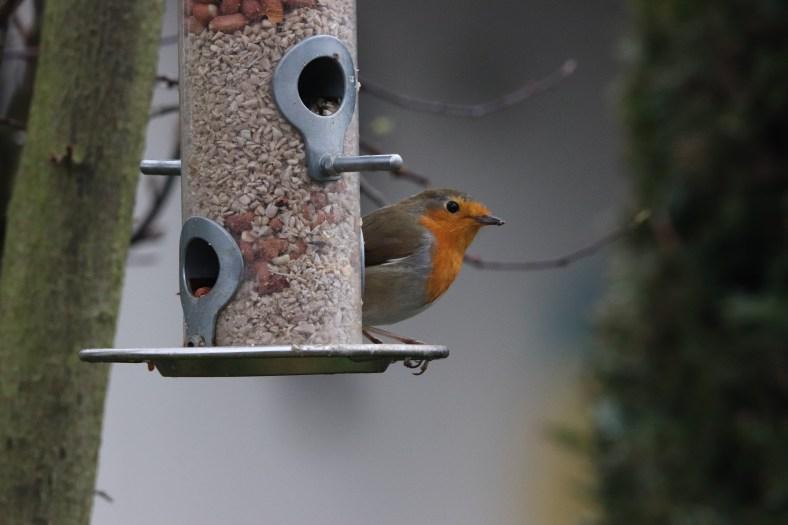 Vogelparade im Garten
