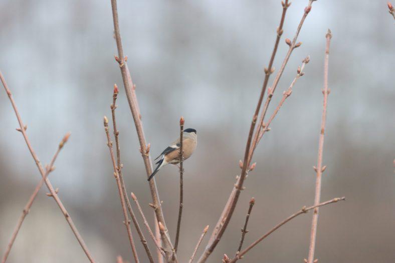 Vogelzählung im Winter