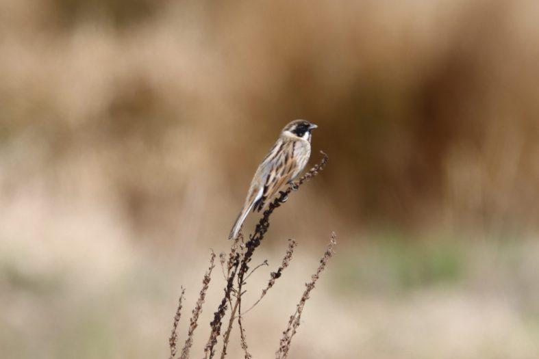 Vogelarten im März