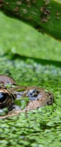 Poor froggie