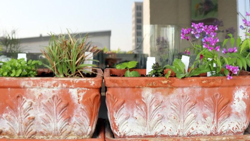 Pflanzpaket der Gärtnerei Staudenspatz & Frank für einen Meter Balkonkasten an einem halbschattigen Standort