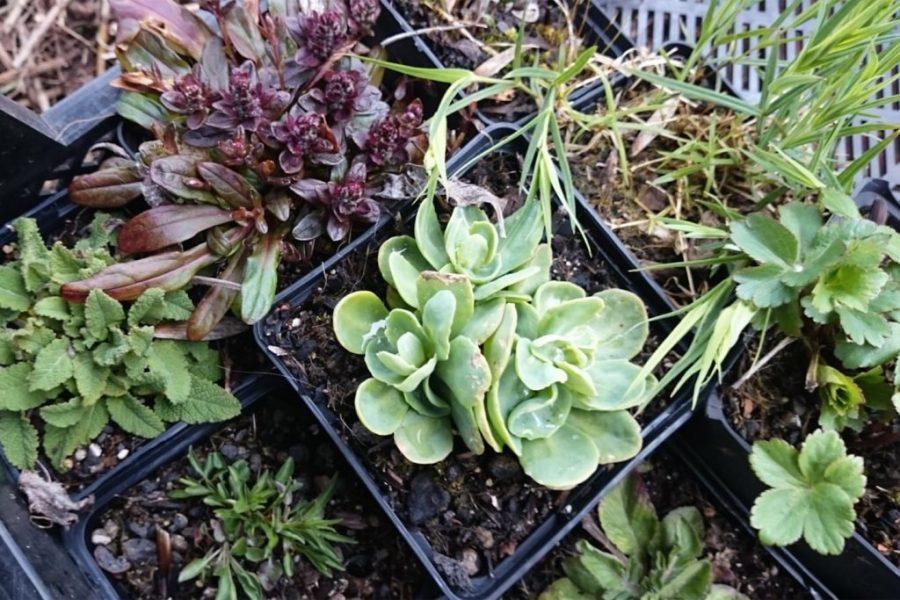 Pflanzen im Töpfen, wie man sie in der Staudengärtnerei kaufen kann.