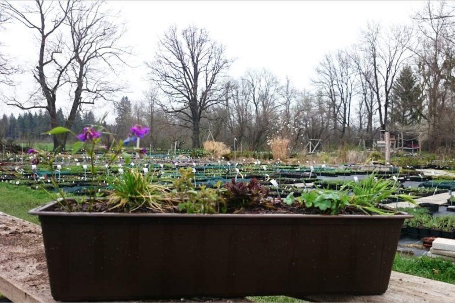 Fertig bepflanzter Balkonkasten für halbschattige und schattige Standorte (Link zum Pflanzpaket im Online-Shop siehe unten)