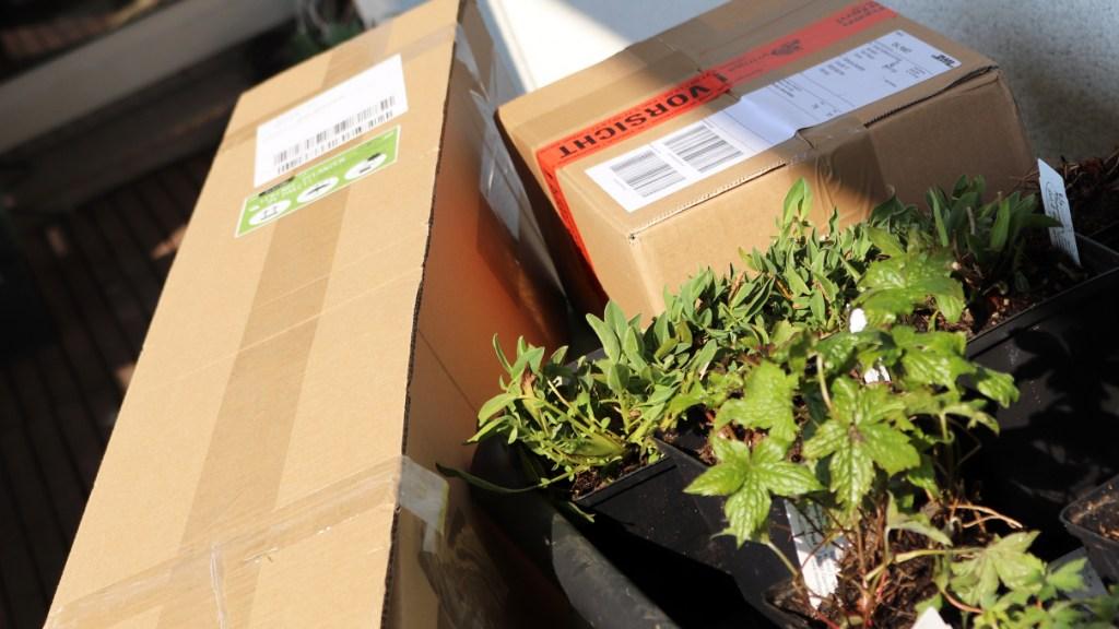 Wildpflanzen-Versand
