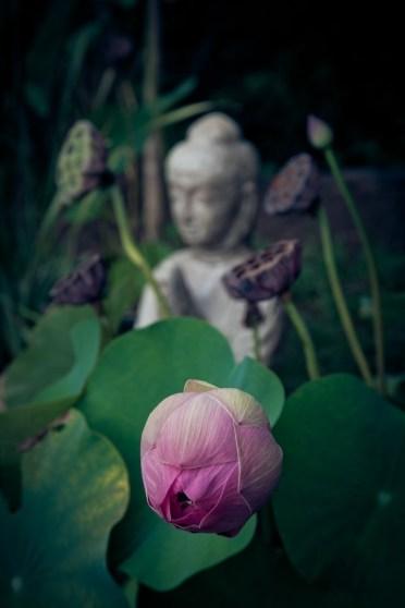 transcendent meditation scam