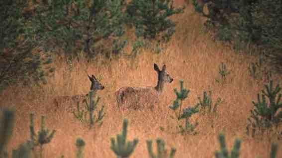 EWS - Lieberose Wilderness -06475_