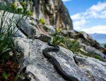 Prespa National Park