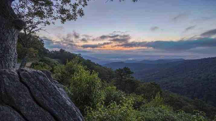 wilderness-is-biodiversity-and