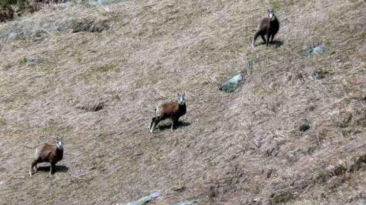 Carpathians wilderness deserves our protection!