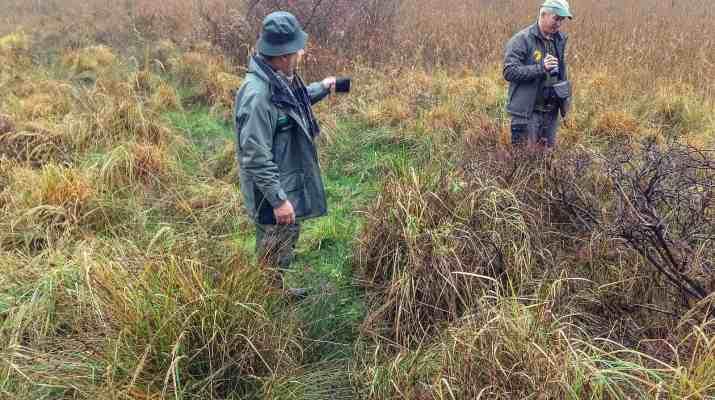 Koenigsbruecker Heide Wilderness 2014 818009.JPG - European Wilderness Society - CC NonCommercial-NoDerivates 4.0 International