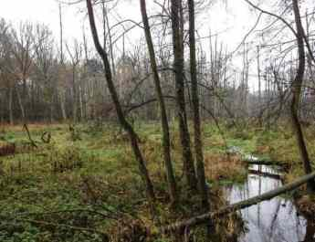 Guiding Natura 2000 wilderness areas
