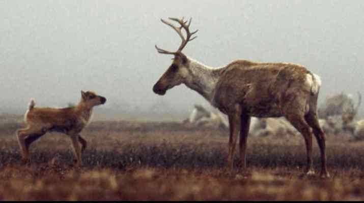 Obama Administration moves to protect Arctic National Wildlife Refuge