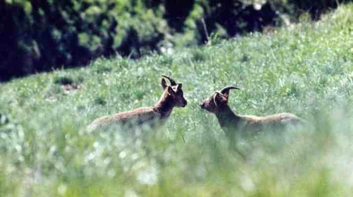 Reaching the European Wilderness Quality Standard
