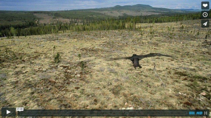 sweden-s-old-growth-forests-threathened-by-clear-cutting.jpg - © European Wilderness Society CC BY-NC-ND 4.0