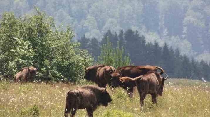 Vanatori Neamt Nature Park