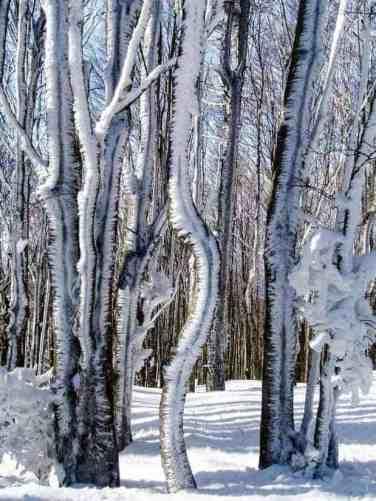 Foreste Casentinesi National Park 2280087