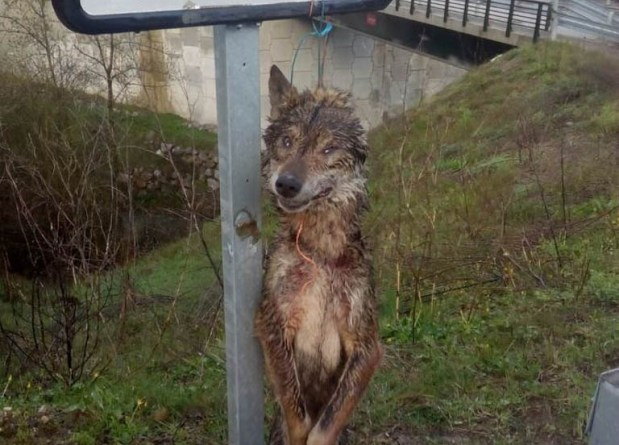 cruel-wolf-kills-across-europe.jpg - © European Wilderness Society CC BY-NC-ND 4.0
