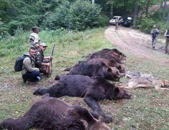 Hunters at work - stop brown bear killing!