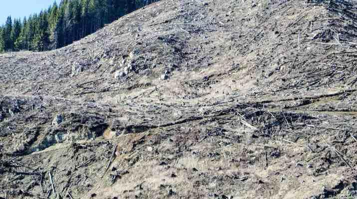 Deforestation Romania Hannes Knapp 0008.JPG - European Wilderness Society - CC NonCommercial-NoDerivates 4.0 International