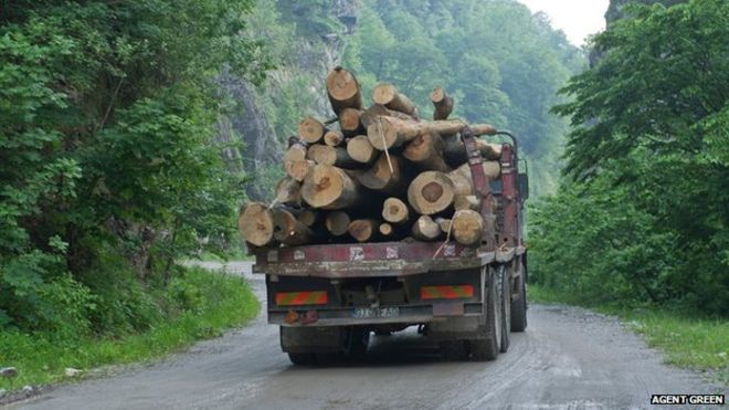 Białowieża Forest is not the only forest in Europe under threat