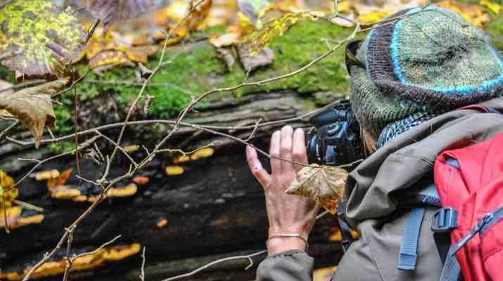 Tatra NP, Sucha Bela 0551.JPG - European Wilderness Society - CC NonCommercial-NoDerivates 4.0 International