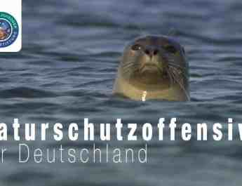 Short film for more wilderness in Germany