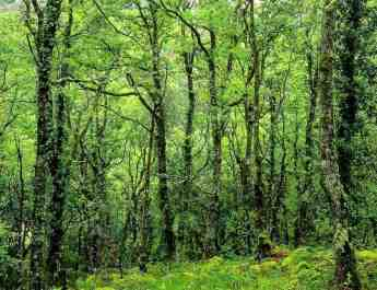 New Italian Forest Law threatens Wilderness and WILDForest