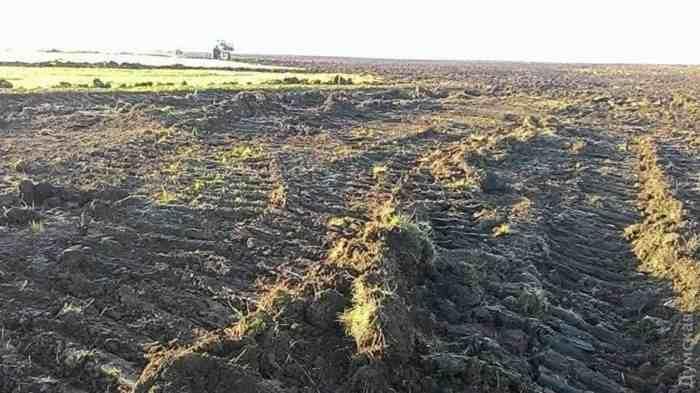 drastic-destruction-of-a-unique-wilderness-in-ukraine-4