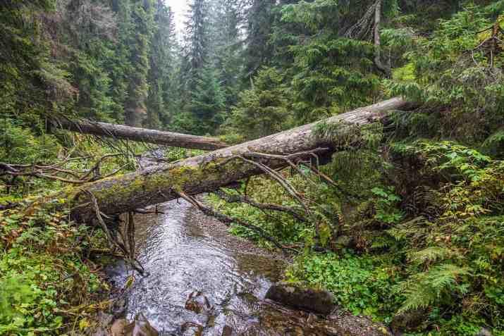 EWS - Wilderness in Albania -03940_
