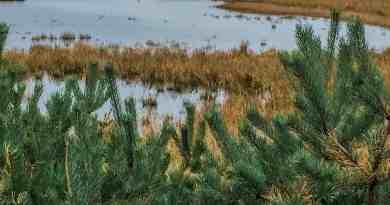 Baltic Coast 2178.JPG - © European Wilderness Society CC BY-NC-ND 4.0