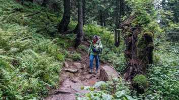 Carpathian National Park 1259