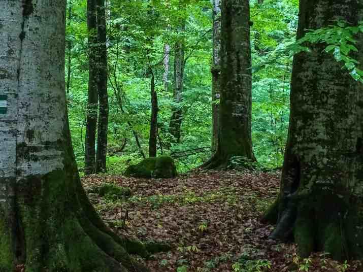 EWS - Uholka Sirokyy Luh Wilderness Exchange Programme -11867_