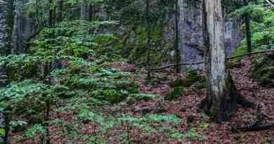 Uholka Wilderness Exchange Programme - 00041.jpg - © European Wilderness Society CC BY-NC-ND 4.0