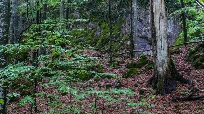 Uholka Wilderness Exchange Programme - 00041.jpg - European Wilderness Society - CC NonCommercial-NoDerivates 4.0 International