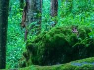 Uholka Wilderness Exchange Programme - 00087.jpg - © European Wilderness Society CC BY-NC-ND 4.0