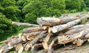 Romanian National Parks victims of deforestation