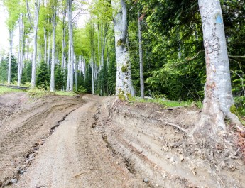 Deforestation Romania Hannes Knapp 0069.JPG - © European Wilderness Society CC BY-NC-ND 4.0