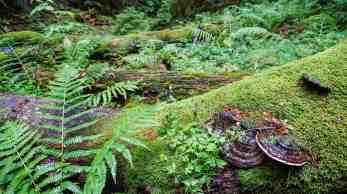 Gorgany Strict Nature Reserve 1008