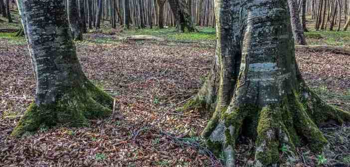 Wilderness Quality of the Primeval Beech Forests in Europe!