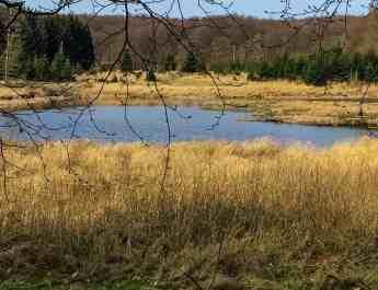Jasmund National Park-3352.jpg - © European Wilderness Society CC BY-NC-ND 4.0