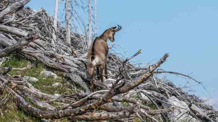 Kalkalpen Wilderness 84-2.jpg - © European Wilderness Society CC BY-NC-ND 4.0