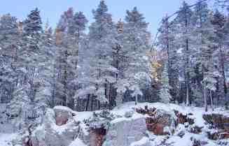 Oulanka National Park--4