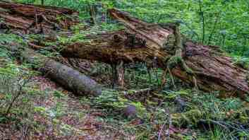 Synevyr National Park 0895