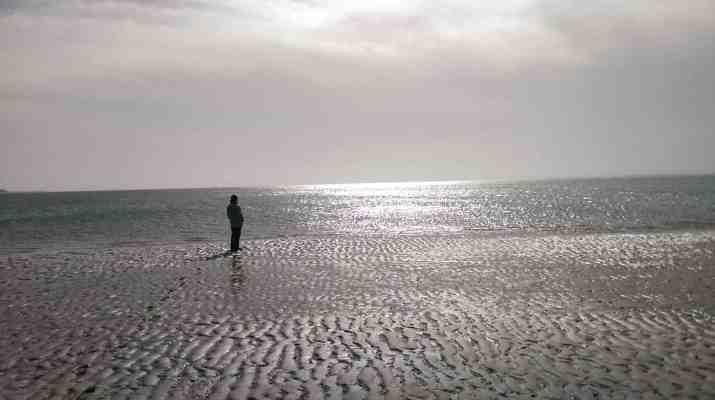 WILDCoast Amrum North Sea