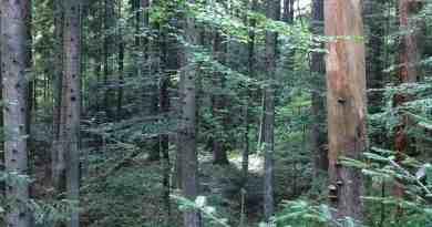 Ukraine Sanitary Logging Analysis 0161.jpg - © European Wilderness Society CC BY-NC-ND 4.0
